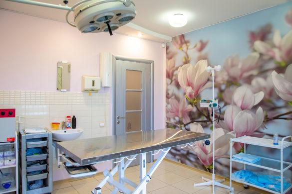 Интерьерная фотосъемка клиники для животных